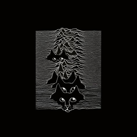 kitten_cover_joy_division