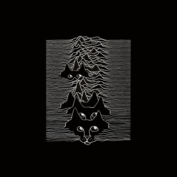 kitten_cover_joy_division