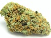 Legendy marihuany: GreenCrack