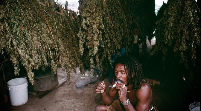 Jamajka depenalizuje posiadanie marihuany!