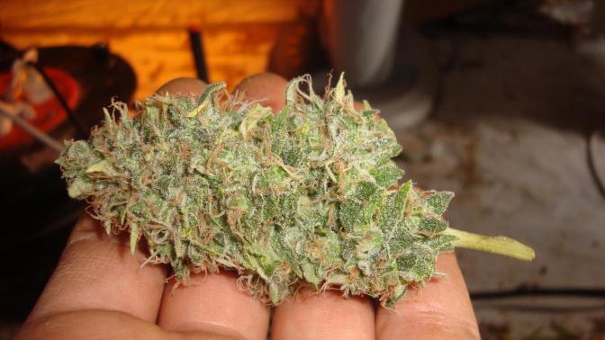 Które państwo naprawdę konsumuje najwięcej marihuany?