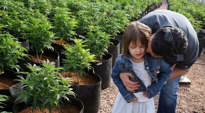 Niemcy zaczną uprawiać medyczną marihuanę w 2019