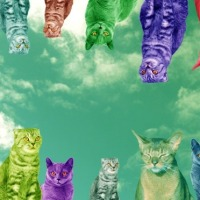 20 psychedelicznych gifów z kotami