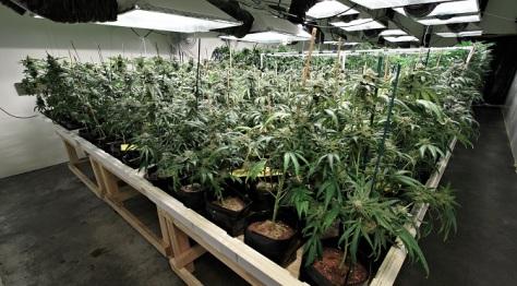 organic_indoor_grow