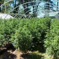 Szef Sundial Growers naświetlił najważniejsze wyzwania stojące przed legalnym przemysłem marihuanowym