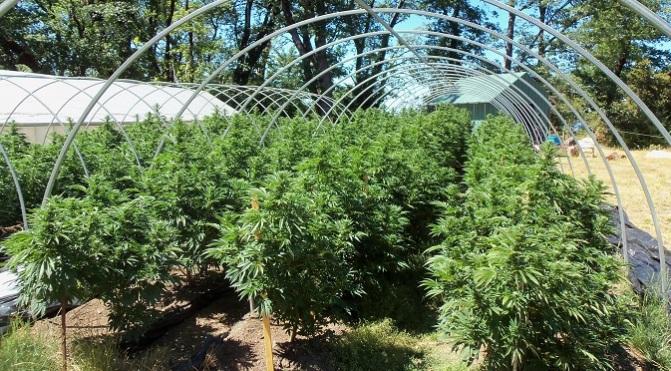 organic_outdoor_grow