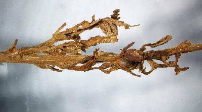 """Odkryto pochówek z """"welonem"""" z konopi w północno-zachodnich Chinach!"""