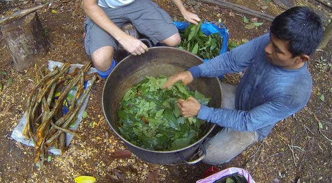 Substancja obecna w ayahuasce stymuluje powstawanie komórek prekursorowych
