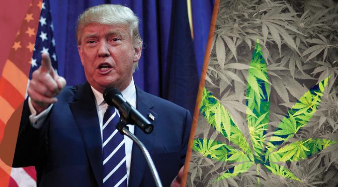 Zwolennicy legalizacji planują rozdawać jointy na inauguracji Trumpa!