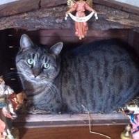 Zobacz 23 koty, które bezpardonowo rozłożyły się w szopce bożonarodzeniowej