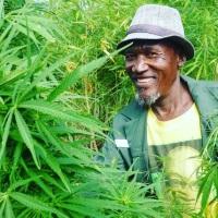 Sąd Najwyższy RPA zalegalizował konsumpcję marihuany przez dorosłych obywateli!