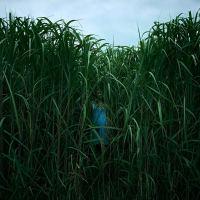 W wysokiej trawie (2019)