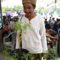 Tajlandia przyśpiesza legalizację medycznej marihuany