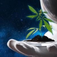 Biotechnologiczni pionierzy wysyłają konopie w kosmos!